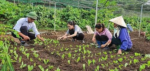 Triết lý làm nông từ mô hình rau hữu cơ lớn nhất miền Bắc - 2