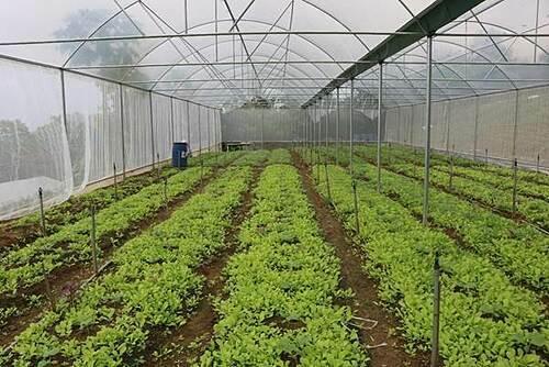 Triết lý làm nông từ mô hình rau hữu cơ lớn nhất miền Bắc - 3