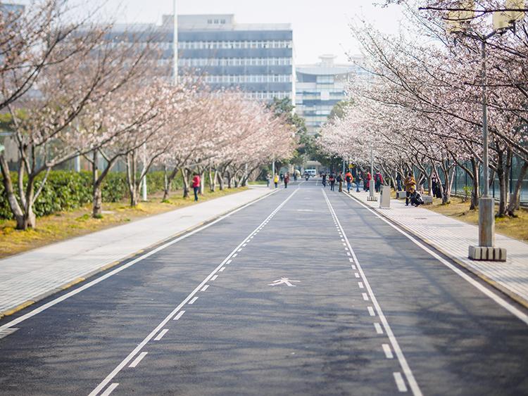 Một góc Đại học Đồng Tế, nơi Sushant theo học. Ảnh: Shutterstock