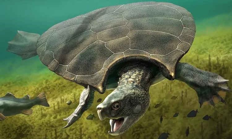 Rùa Stupendemys geographicus sống ở thế Trung Tân. Ảnh: Newsweek.