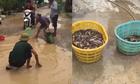 Bắt cá ở ổ gà giữa đường