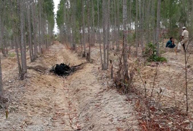 Thi thể cháy đen nằm trong rừng bạch đàn ở xã Sông Bình. Ảnh: Trường Nguyên.
