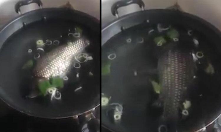 Nồi canh cá nguyên con của nàng dâu mới -