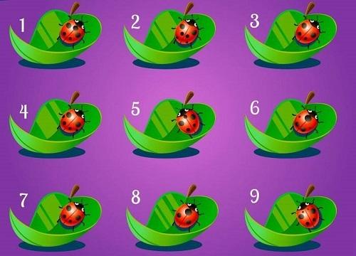 Năm câu đố thử tài tinh mắt - ảnh 3