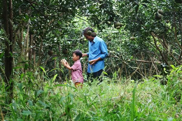 Hàng năm, tổ chức Control Union lấy mẫu trái và cành lá 6 góc trong vườn để kiểm tra chất lượng, 0.01ppm dư lượng tồn đọng cũng khiến chứng nhận hữu cơ bị hủy bỏ.