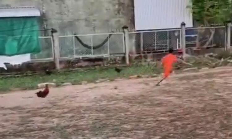 Gà trống đuổi cậu bé chạy thục mạng -