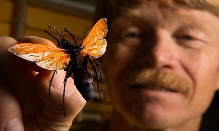 Để côn trùng độc đốt lên cơ thể hơn 1.000 lần -