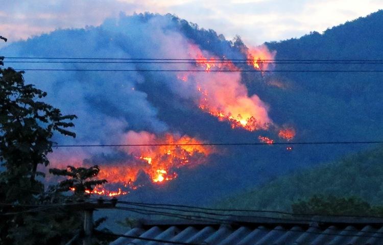 Cháy rừng phòng hộ - ảnh 1