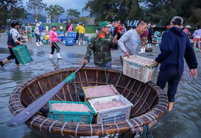 Ngư dân trúng mùa ruốc