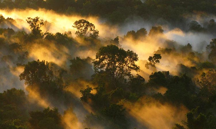 Rừng Amazon lúc bình minh. Ảnh: Peter Vander Sleen.