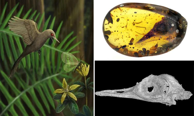 Hình ảnh phục dựng loài khủng long nhỏ nhất dựa trên hóa thạch hộp sọ. Ảnh: SWNS.