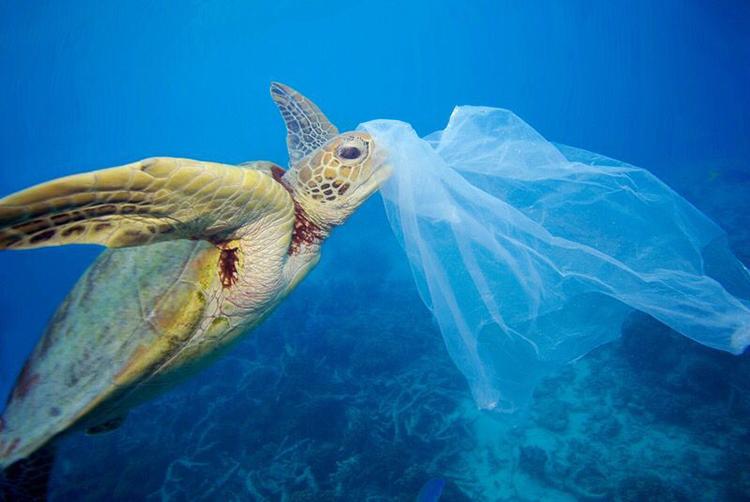Ô nhiễm rác thải nhựa đe dọa hoạt động du lịch ngắm rùa ở Oman. Ảnh: Turtle Island Restoration Network.