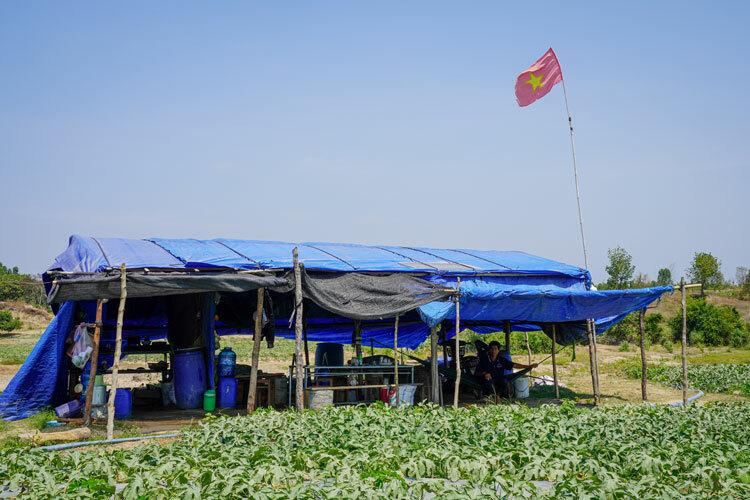Căn lều gia đình ông Tâm ăn ở trong suốt nhiều tháng để chăm sóc dưa ở xã Chư Drăng. Ảnh: Ngọc Oanh.