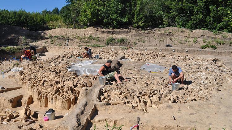 Hàng trăm xương moi ma mút được ghép thành hình tròn khổng lồ ở Nga. Ảnh: Science Mag.