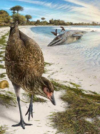 Chim Asteriornis maastrichtensis có thể từng sống ở bờ biển. Ảnh: BBC.