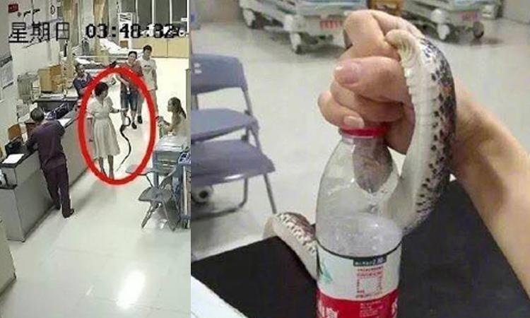 Cô gái mang rắn tìm bác sĩ khiến bệnh viện toát mồ hôi
