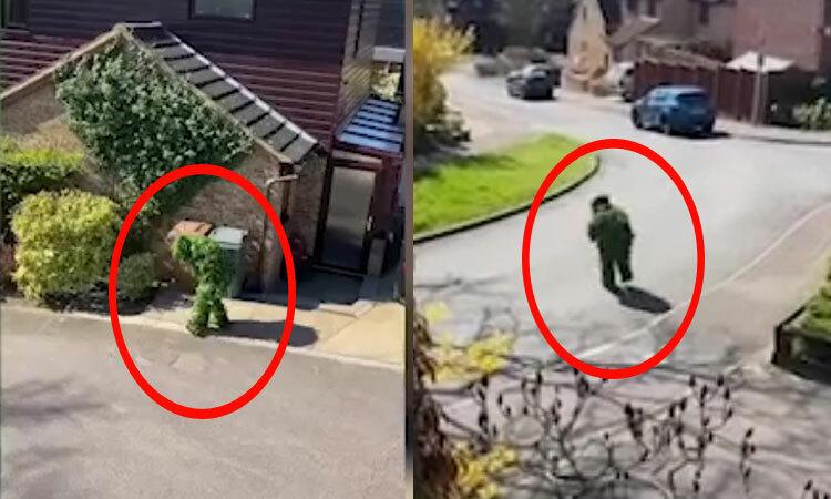 Hàng xóm ngụy trang thành bụi cây để trốn cách ly -