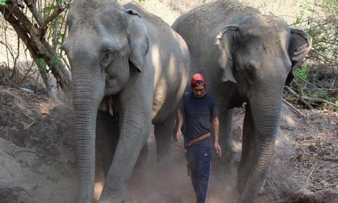 Nhiều người nuôi voi ở Thái Lan để phục vụ khách du lịch. Ảnh: BBC.