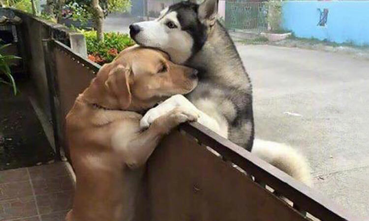 Nỗi khổ của cặp đôi cún cưng yêu xa
