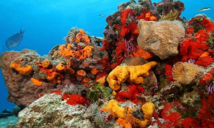 Bọt biển giúp giảm số lượng virus dưới biển. Ảnh: CK-12.