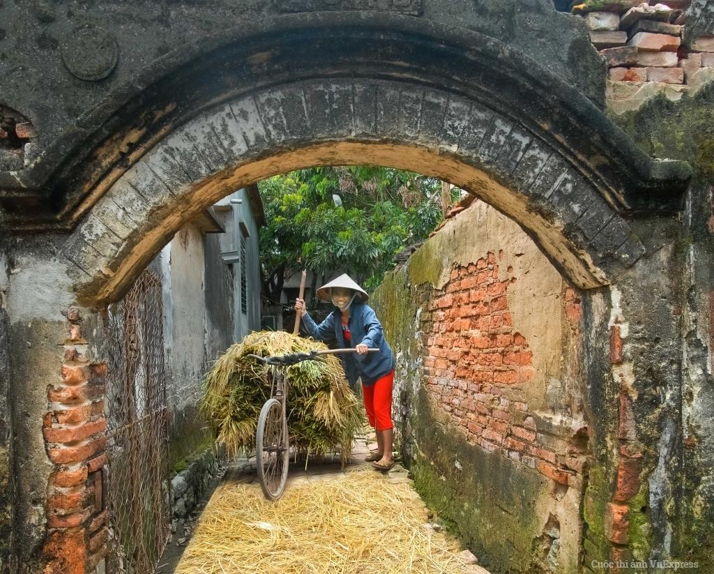 Lúa về làng