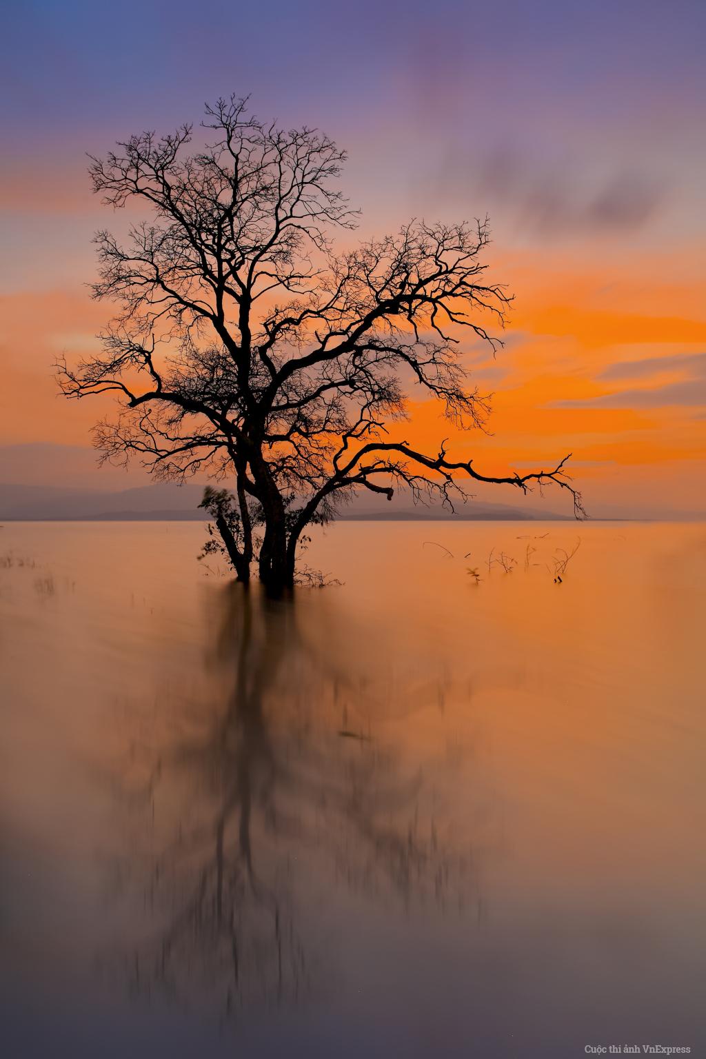 Cái cây ở hồ thủy điện Sông Hinh